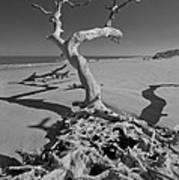 Shadows At Driftwood Beach Poster by Debra and Dave Vanderlaan