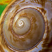 Shell Spiral Poster by Garry Gay