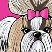 Shih Tzu Show Girl Poster by Kim Niles