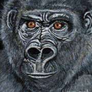 Silverback Poster by Janis  Cornish