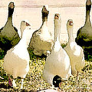 Six Geese And A Duck Poster by Artist and Photographer Laura Wrede