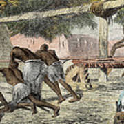 Slaves Irrigating By Water-wheel Poster by English School