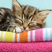 Sleepy Kitten Poster by Greg Cuddiford