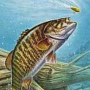 Smallmouth Bass Poster by JQ Licensing