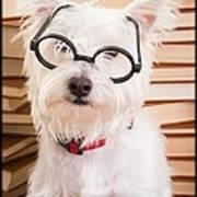 Smart Doggie Poster by Edward Fielding