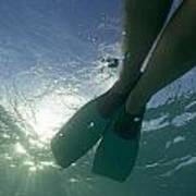 Snorkeller Legs With Flippers Underwater Poster by Sami Sarkis