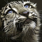 Snow Leopard Cub Poster by Jurek Zamoyski