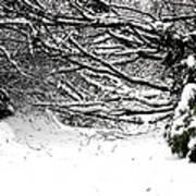 Snow Scene 5 Poster by Patrick J Murphy