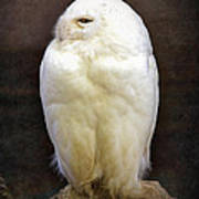 Snowy Owl Vintage  Poster by Jane Rix