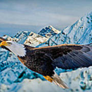 Soaring Bald Eagle Poster by Gary Keesler