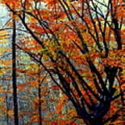 Song Of Autumn Poster by Karen Wiles