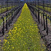 Sonoma Mustard Grass Poster by Garry Gay