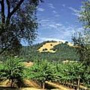 Sonoma Valley Vineyard Poster by Craig Lovell