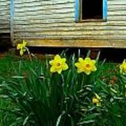 Spring At The Old Home Place Poster by Julie Dant