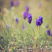 Spring Flowers Poster by Diana Kraleva