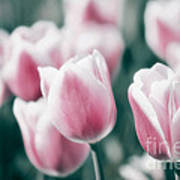 Spring In Love Poster by Angela Doelling AD DESIGN Photo and PhotoArt