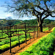 Spring In The Vineyard Poster by Elaine Plesser