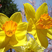 Spring Orange Yellow Daffodil Flowers Art Prints Poster by Baslee Troutman