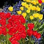Spring Sunshine Poster by Carol Groenen