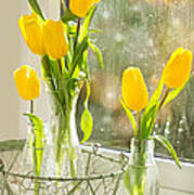 Spring Tulips Poster by Amanda And Christopher Elwell