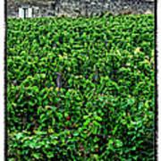 St. Emilion Winery Poster by Joan  Minchak