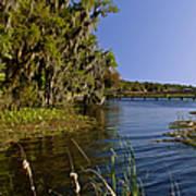 St Johns River Florida Poster by Christine Till