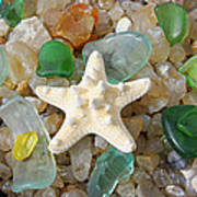 Starfish Fine Art Photography Seaglass Coastal Beach Poster by Baslee Troutman
