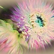 Strawflower Awakening Poster by Shirley Sirois