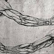 Study Of Arms Poster by Leonardo Da Vinci