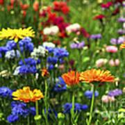 Summer Flowers Poster by Elena Elisseeva