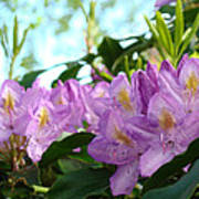 Summer Rhodies Flowers Purple Floral Art Prints Poster by Baslee Troutman