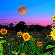 Sunflower Patch And Moon  Poster by Randall Branham