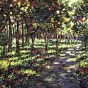 Sunlit Trees Poster by John  Nolan