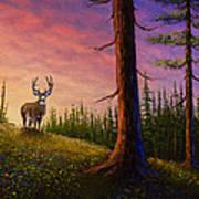 Sunrise Buck Poster by C Steele