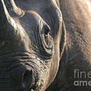 Sunrise Rhino Poster by Alison Kennedy-Benson