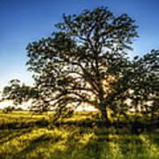 Sunset Oak Poster by Scott Norris
