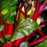 Swiss Chard Forest Poster by Karen Wiles