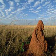 Termite Mound In Cerrado Grassland Emas Poster by Tui De Roy