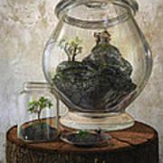 Terrarium Poster by Cynthia Decker