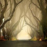 The Dark Hedges 2011 Poster by Pawel Klarecki