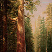 The Great Trees Mariposa Grove California Poster by Albert Bierstadt