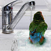 The Lovebird's Shower Poster by Terri Waters