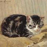 The Tabby Poster by Henriette Ronner-Knip