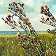 Thistles On The Beach - Oil Poster by Michelle Calkins