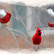 Three Cardinals In A Tree Poster by Dan Friend