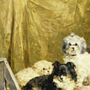 Three Dogs Poster by Charles van den Eycken