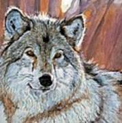 Timber Wolf Poster by David Lloyd Glover