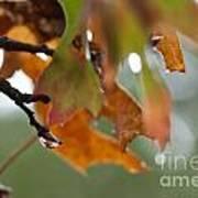 Tiny Leaf Poster by Barbara Shallue