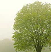 Tree In Fog Poster by Elena Elisseeva