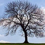Tree Silhouette Poster by Natalie Kinnear